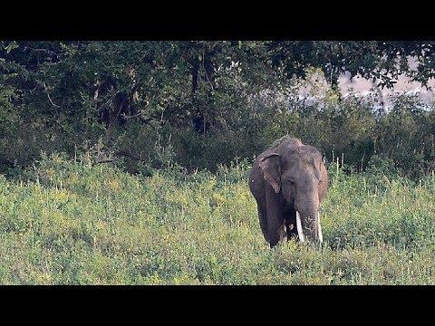 العرب اليوم - سلامة المواطنين تقابلها حياة الأفيال في يوننان