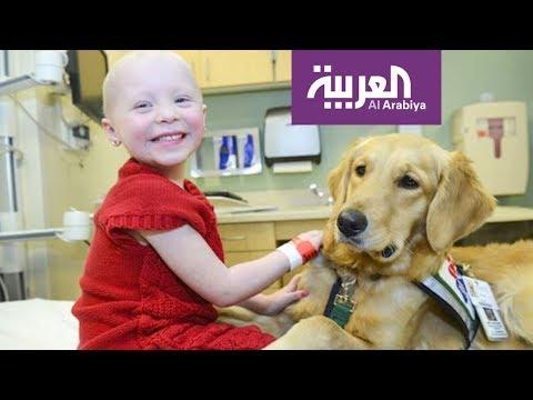 العرب اليوم - تقنية رائدة لعلاج مرض اللوكيميا المنتشر بكثافة بين الأطفال