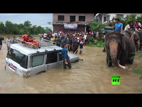 العرب اليوم - شاهد إجلاء سياح أجانب من منطقة الفيضانات على ظهور الفيلة