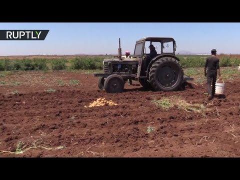 العرب اليوم - شاهد القطاع الزراعي يبدأ بالتعافي في درعا