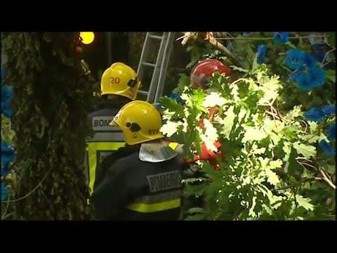 العرب اليوم - شاهد 11قتيلًا إثر سقوط شجرة في البرتغال