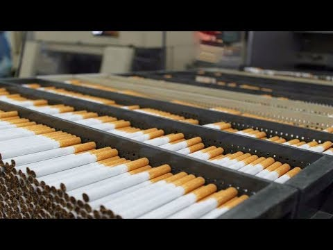 العرب اليوم - تعرف على كيفية صناعة السجائر