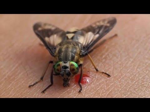 العرب اليوم - شاهد أكثر 10 حشرات مزعجة في العالم
