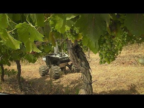العرب اليوم - شاهد فينبوت لزيادة القدرة التنافسية لمزراعي الكرمة ومصنعي النبيذ الأوروبيين