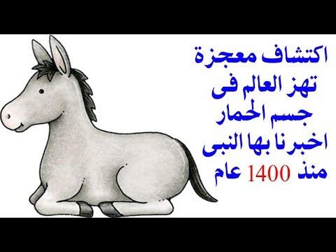 العرب اليوم - شاهد لن تصدق ماذا وجد العلماء داخل جسم الحمار