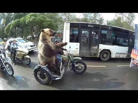 العرب اليوم - دب يركب دراجة نارية ويسلي السائقين على الطريق