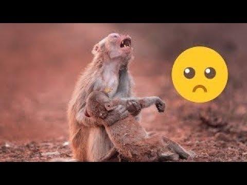 العرب اليوم - حيوانات تبكي مثل البشر