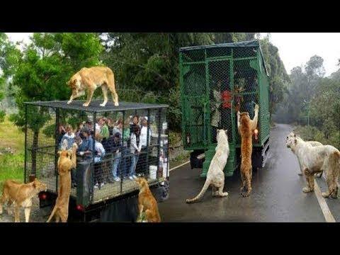 العرب اليوم - تصرفات عجيبة للحيوانات إذا لم تستطع الوصول للناس