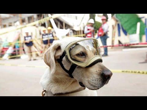 العرب اليوم - تعرف على الكلبة فريدا بعد أن ذاع صيتها