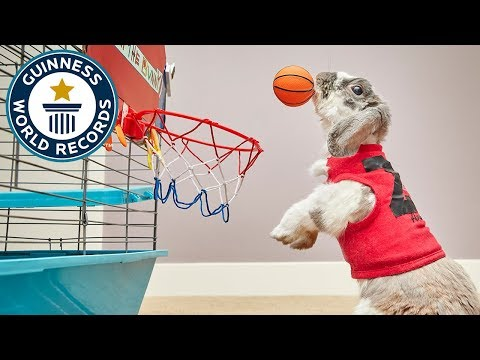 العرب اليوم - أرنب يقفز لوضع الكرة داخل السلة