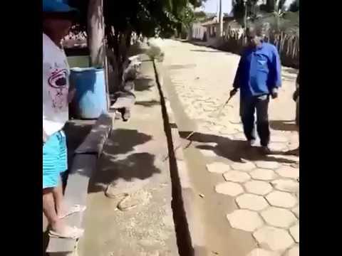 العرب اليوم - رد فعل رجل حاول آخر المزاح معه أثناء الإمساك بثعبان