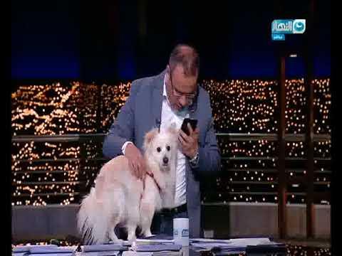 العرب اليوم - شاهد جابر القرموطي يتحدى الأزهر والإفتاء بظهوره بكلب على الهواء
