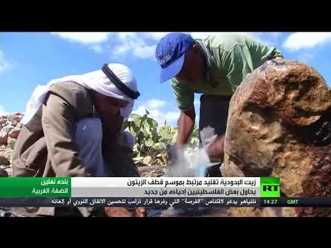 العرب اليوم - شاهد زيت البدودية تقليد مرتبط بقطاف الزيتون