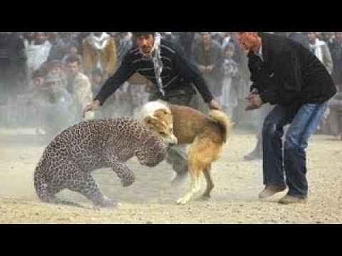 العرب اليوم - 10 معارك جنونية بين الحيوانات تحت شعار البقاء للأقوى