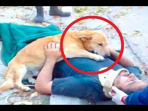 العرب اليوم - شاهد كلاب وفية لأصحابها حتى النهاية
