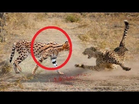العرب اليوم - شاهد حيوانات أنقذت حياة صغارها بشكل لا يصدق