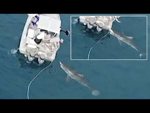 العرب اليوم - لحظة هجوم قرش أبيض ضخم على قارب صيد