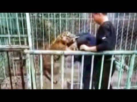 العرب اليوم - نمر صغير يهرب من حديقة حيوان