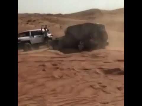 العرب اليوم - رجل يستعرض مهاراته في القيادة بطريقة مذهلة