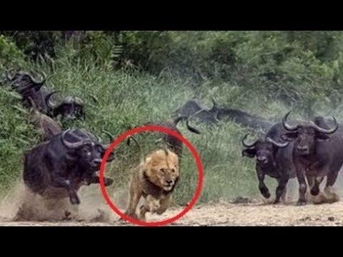 العرب اليوم - شاهد لحظات رائعة لحيوانات أنقذت حياة صغارها بشكل لايصدق