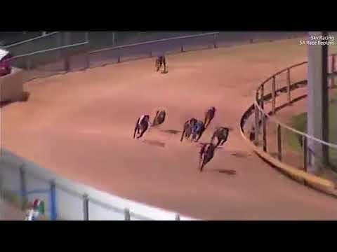 شاهد كلب يخسر سباقا في اللحظة الأخيرة بسبب بطة