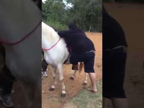 شاهد حصان يتسبب في إحراج رجل بدين