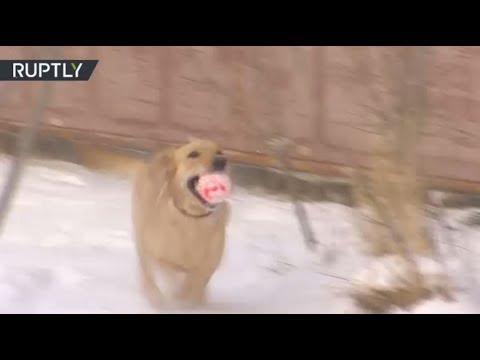 كلاب روسية تساعد الجيش السوري