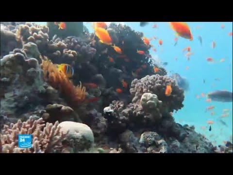 شاهد ما هي أسرار الشعب المرجانية في البحر الأحمر