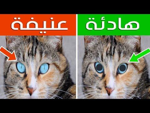 16 علامة خفية عن القطط