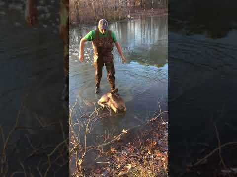 لحظة إنقاذ غزال سقطت فريسة في بركة مياه متجمدة