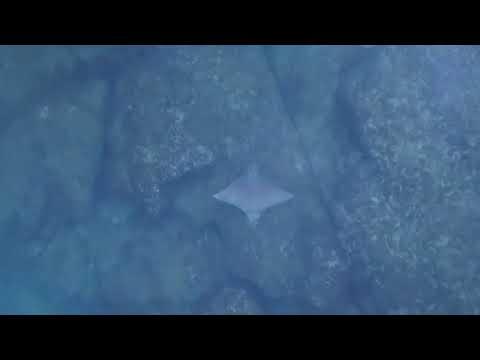طائرة دون طيار ترصد لحظة هروب سمكة من قرش