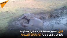 شاهد لحظة إنقاذ فيل غارق في الوحل في قرية ماديالي الهندية