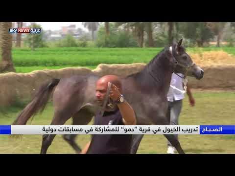 شاهد قرية دمو في الفيوم الشهيرة بتربية الخيول تكشف أسرار التاريخ