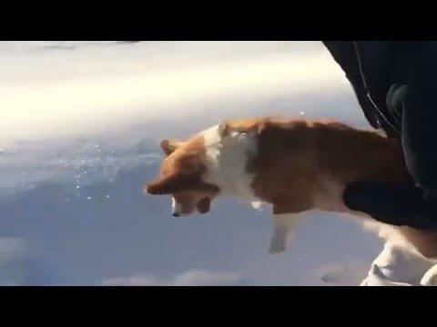 شاهد مقطع يوثّق إلقاء سيدة لكلبها من الطائرة