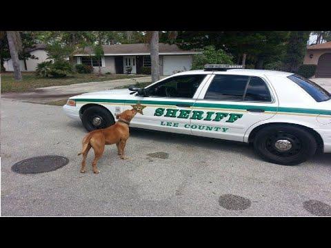 استدعت الشرطة لتأخذ هذا الكلب الخطير