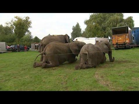 شاهد قانون جديد يحيل 3 فيلة سيرك دنماركي إلى التقاعد