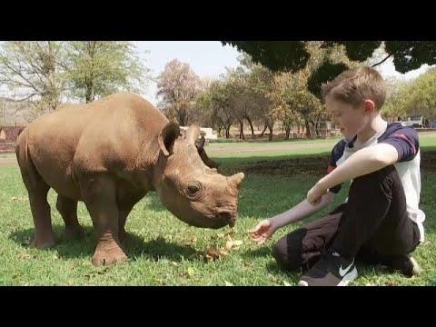 شاهد طفل صغير يتكفَّل بمُهمِّة حماية صغار حيوان وحيد القرن