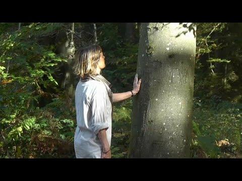 شاهد انتشار العلاج بحمام الغابات في بلجيكا