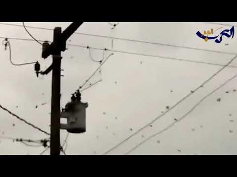 شاهد  السماء تمطر عناكب وتثير ذعر السكان في البرازيل