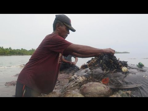 حوت نافق يبتلع ستة كيلوغرامات من مخلفات البلاستيك في أندونيسيا