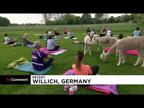 أجواء ساحرة لممارسة اليوغا في الحياة البرية في ألمانيا