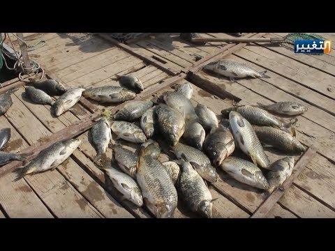 كارثة نفوق الأسماك في العراق تظهر من جديد والجاني مجهول