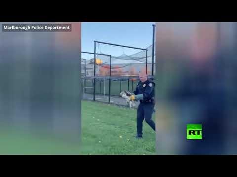 شرطي ينقذ صقرًا كبيرًا عالقًا في شباك مرمى في مارلبورو
