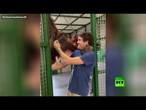 قرد يقبل ظهير تشيلسي ماركوس ألونسو في مشهد طريف