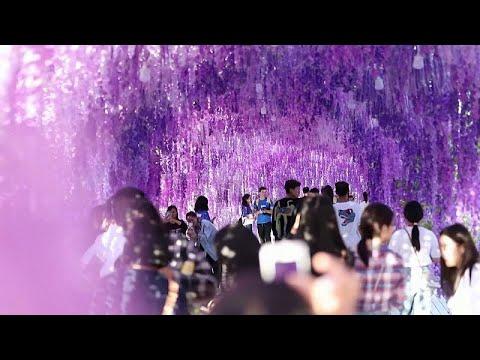 شاهد الصينيون ينظمون أنشطة عدة احتفالا بمهرجان منتصف الخريف