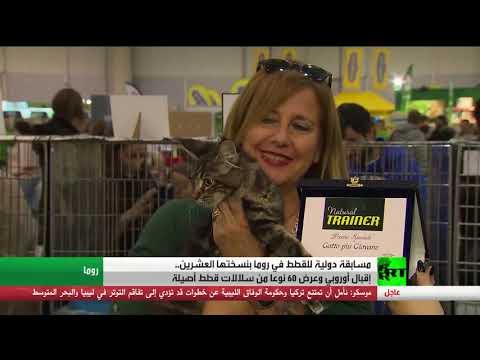 معرض للقطط الفريدة في روما في الذكرى السنوية الـ20