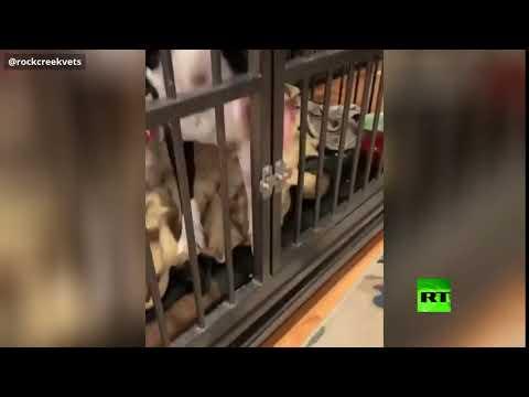 كلب ذكي يستخدم لسانه للهروب من قفصه في كولورادو الأميركية