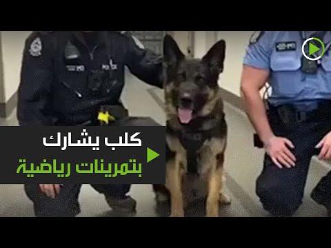 شاهد كلب الشرطة يشارك في التمرينات الرياضية