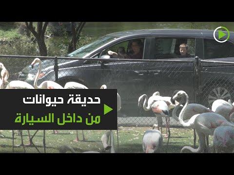 شاهد حديقة حيوانات تستقبل الزوار وهم بسياراتهم في فينيكس