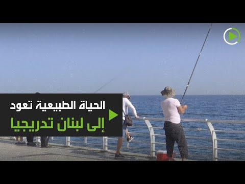 شاهد عودة الحياة العادية إلى لبنان تدريجيا بعد إغلاق كورونا